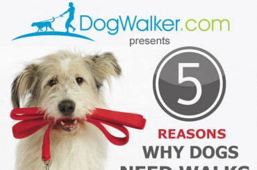 46 Catchy Dog Walking Business Names