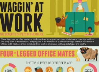 Why You Should Allow Pets in the Office and Workplace