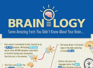 13 Interesting Facts About the Human Brain