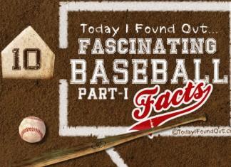 45 Funny Minor League Baseball Team Names