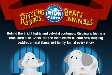 Catchy Circus Slogans and Taglines