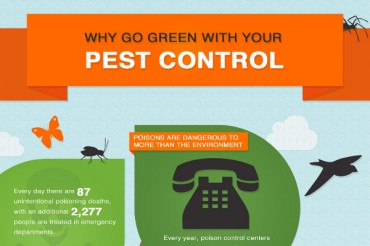 42 Ideas for Pest Control Company Names