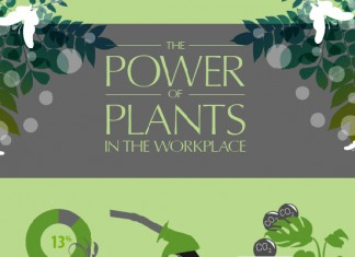 13 Ways Indoor Plants Increase Workplace Productivity