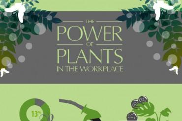 13 Ways Indoor Plants Increase Workplace Productivity