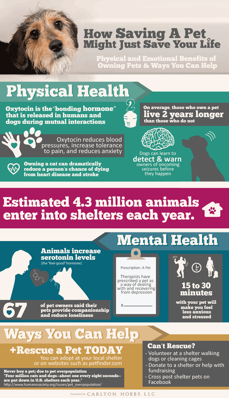 Top 12 Fundraising Ideas for Animal Shelters - BrandonGaille com