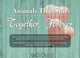 10 Animals that Stay Together Forever