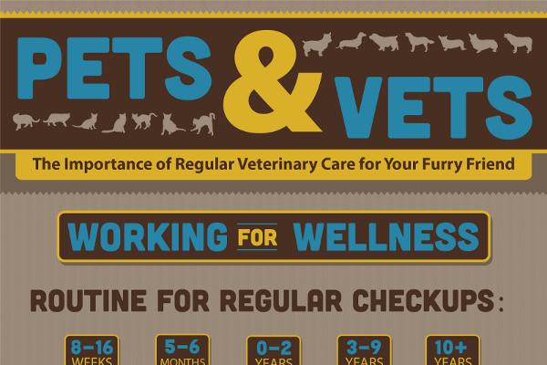 11 Great Veterinary Marketing Ideas - BrandonGaille com