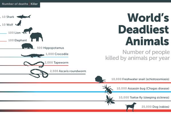 15 Deadliest Animals on Earth