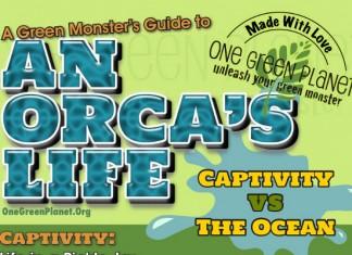 20 Captive Orca Statistics