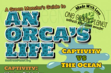20 Provocative Captive Orca Statistics