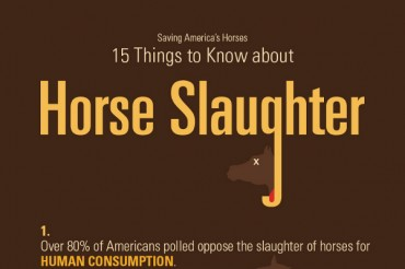 21 Shocking Horse Slaughter Facts and Statistics
