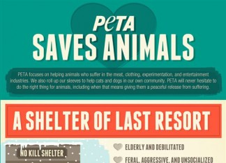42 Surprising Pet Overpopulation Statistics