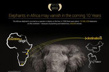 21 Intriguing African Elephant Population Statistics