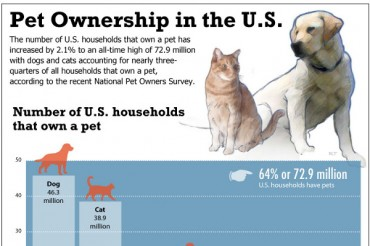 39 Curious Spaying And Neutering Statistics