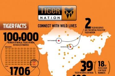 19 Important Tiger Poaching Statistics