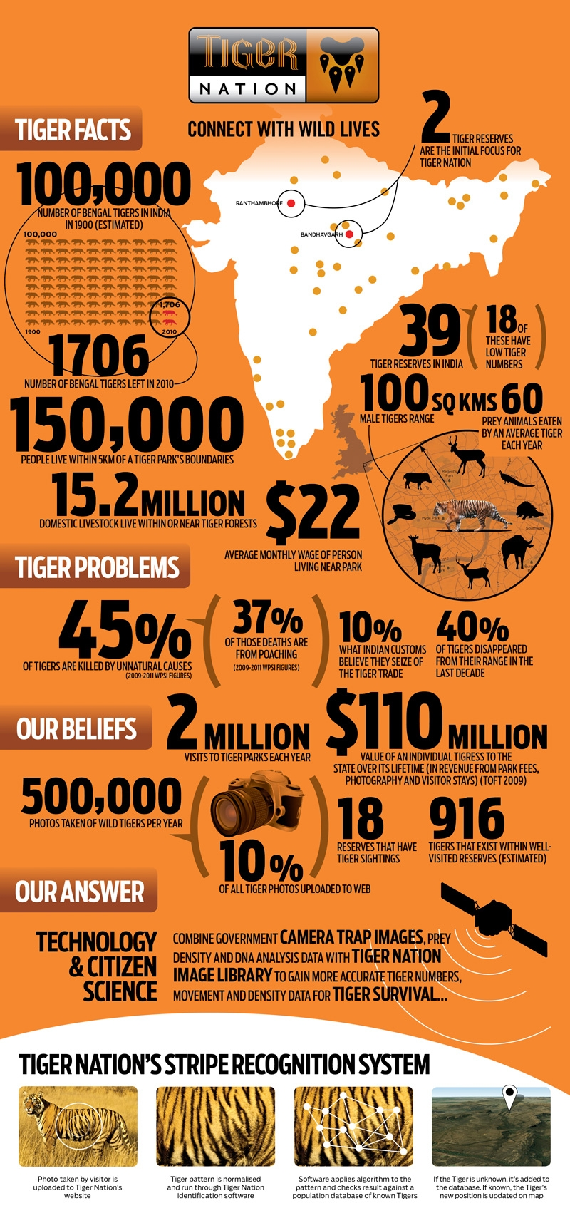 Tiger Facts and Statistics