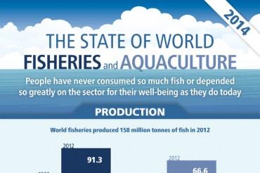 36 Odd Overfishing Statistics