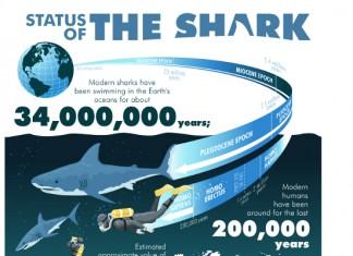 32 Rare Great White Shark Attack Statistics