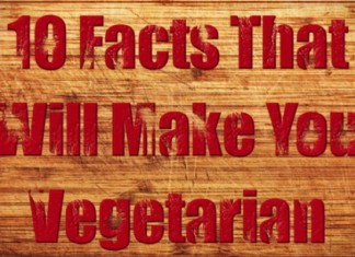 29 Clever Catchy Vegetarian Slogans