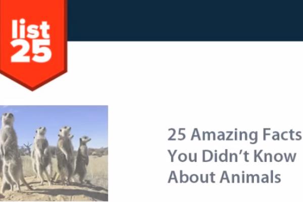 31 Great Catchy Animal Magazine Slogans - BrandonGaille com