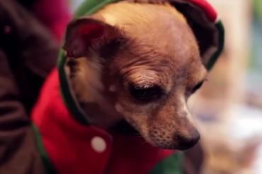 30 Good Catchy Pet Shop Slogans