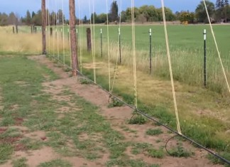 How to Start a Hop Farm