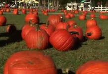31 Great Catchy Pumpkin Patch Business Names