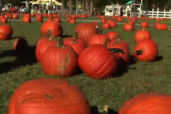 101 Great Catchy Pumpkin Patch Business Names