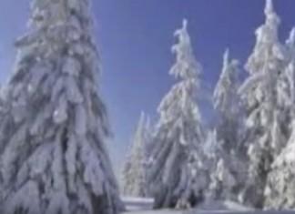 43 Clever Catchy Coniferous Forest Slogans