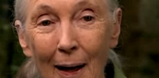 18 Captivating Jane Goodall Quotes