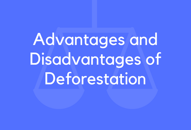 advantages and disadvantages of forests Cleaning the forest floor fire removes low-growing underbrush, cleans the forest floor of debris, opens it up to sunlight, and nourishes the soil benefits of fire.