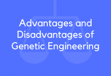 Advantages and Disadvantages of Genetic Engineering