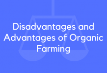 Disadvantages and Advantages of Organic Farming