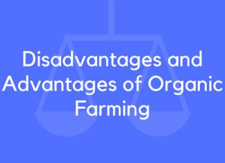Disadvantages and Advantages of Organic Farming