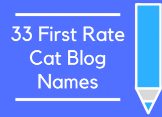 33 First Rate Cat Blog Names