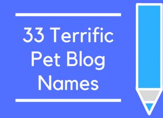 33 Terrific Pet Blog Names
