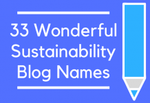 33 Wonderful Sustainability Blog Names