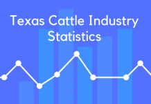 Texas Cattle Industry Statistics
