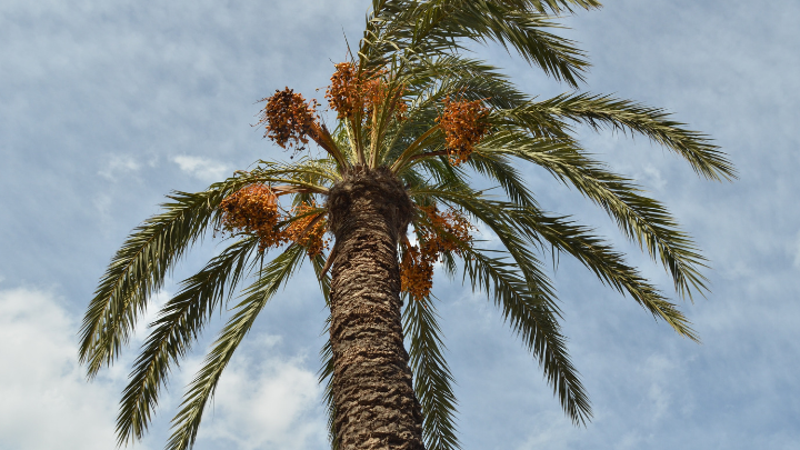 38 Palm Oil Industry Statistics and Trends