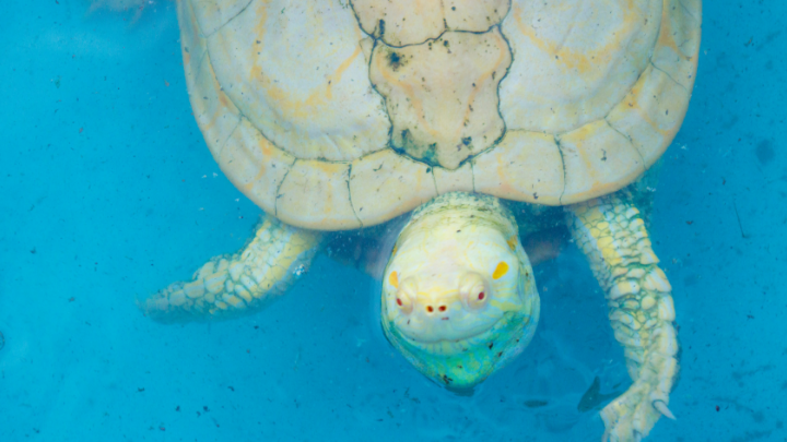 51 Catchy Save Turtles Slogans