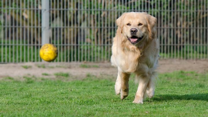 41 Catchy Dog Kennel Slogans