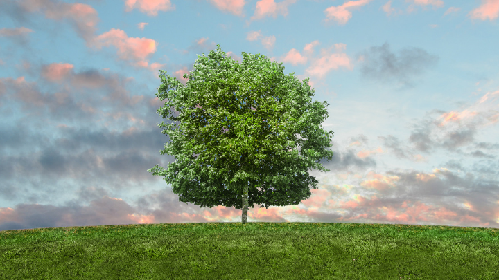 51 Good Arbor Day Slogans and Quotes