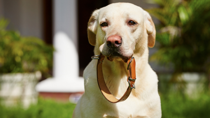 51 Cool Dog Collar Business Names