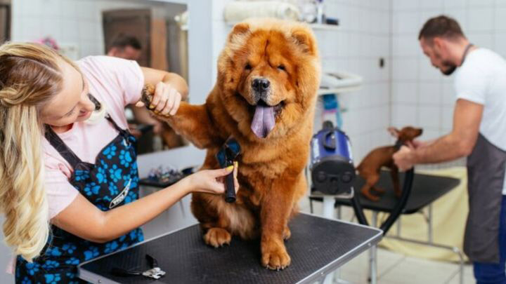 Dog Grooming Industry Statistics and Trends