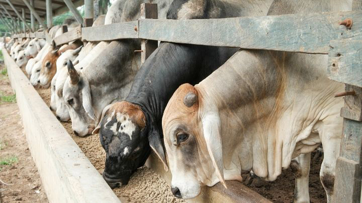 Cattle Industry Statistics, Trends & Analysis